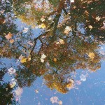 autumn-reflection