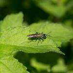 Green Body Fly