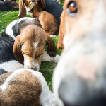 frampton country fair 2015 simontaylorimages dogs