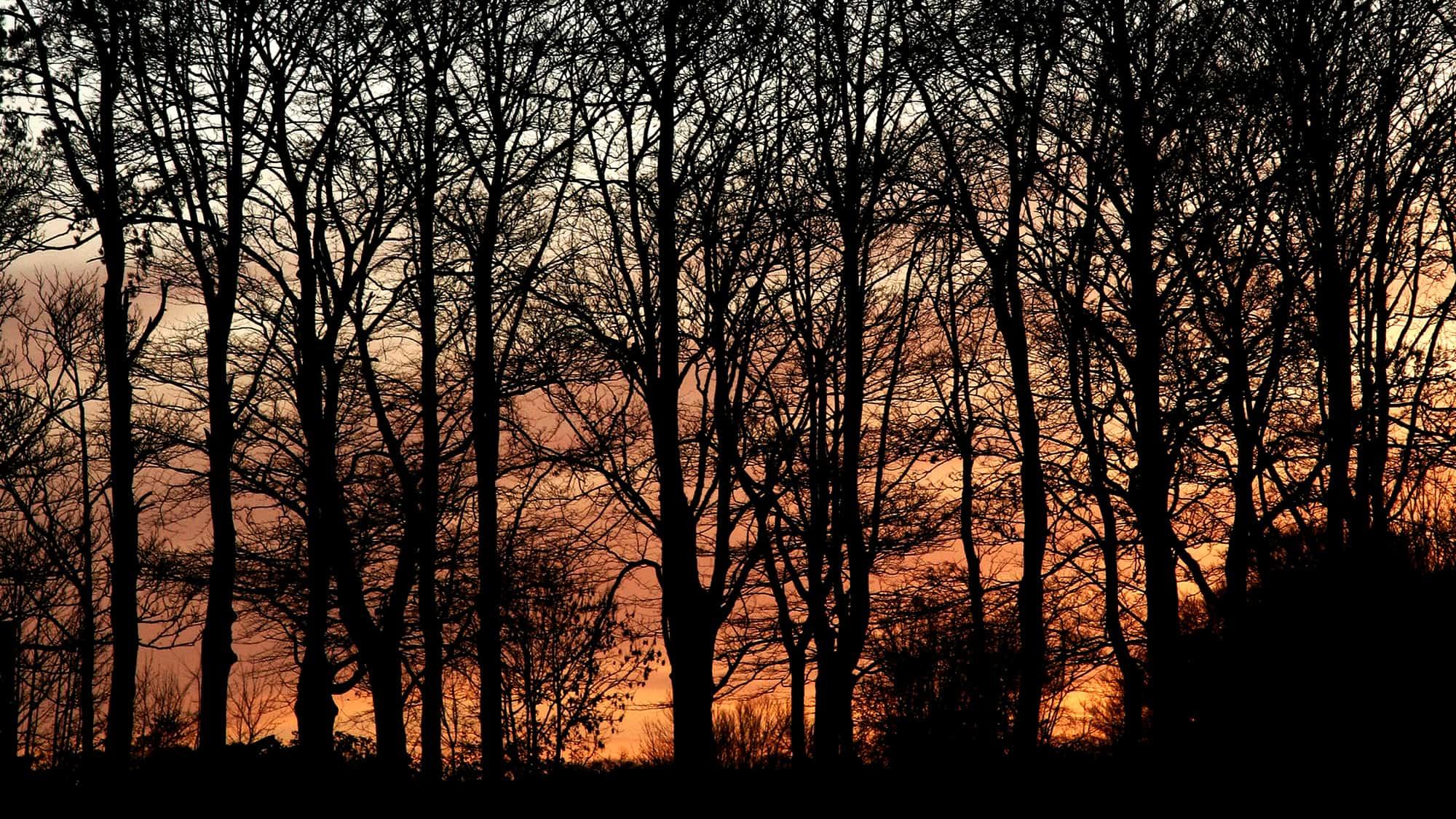 Dawn - Autumn Sun Rise breaks through the trees
